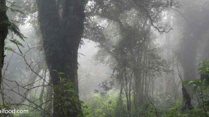 Luftfeuchtigkeit Thailand