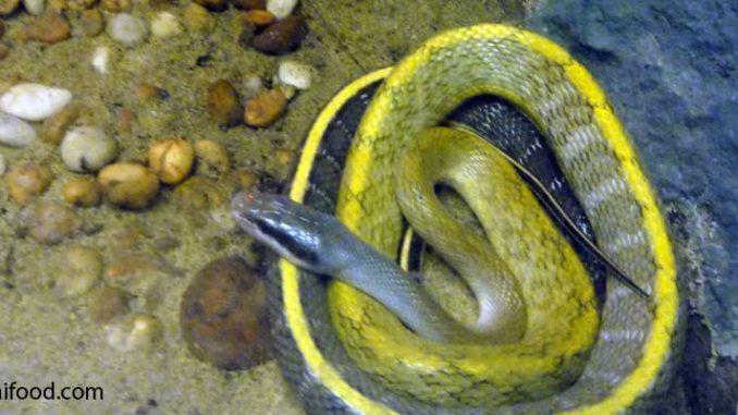 Giftige Schlangen in Thailand