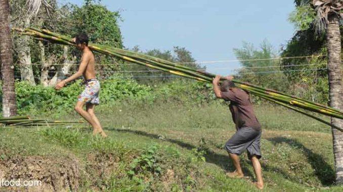 Mückenschutz Thailand