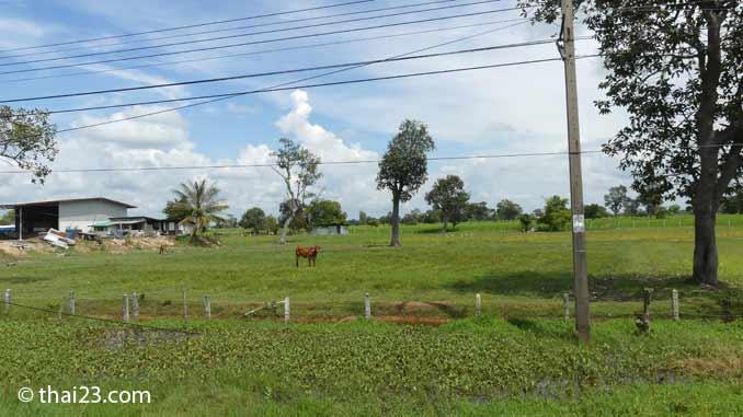 Farm in der Provinz Roi Et