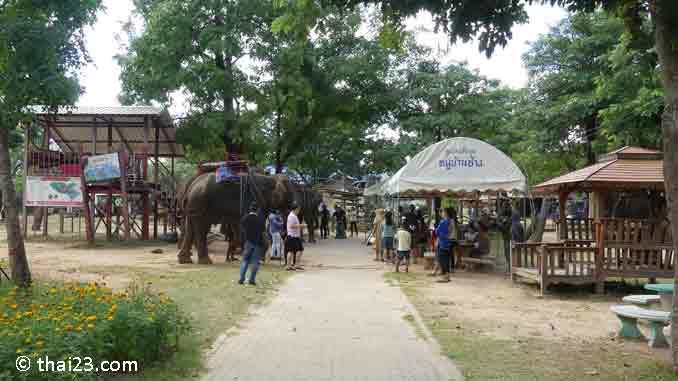 Elefantenreiten im Ban Ta Klang Elefantendorf