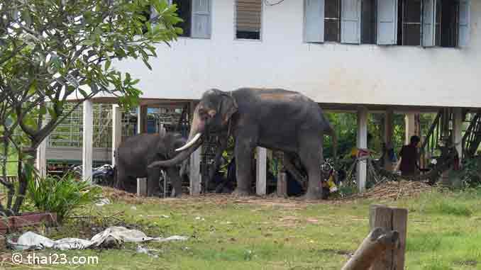 Elefantendorf Thailand