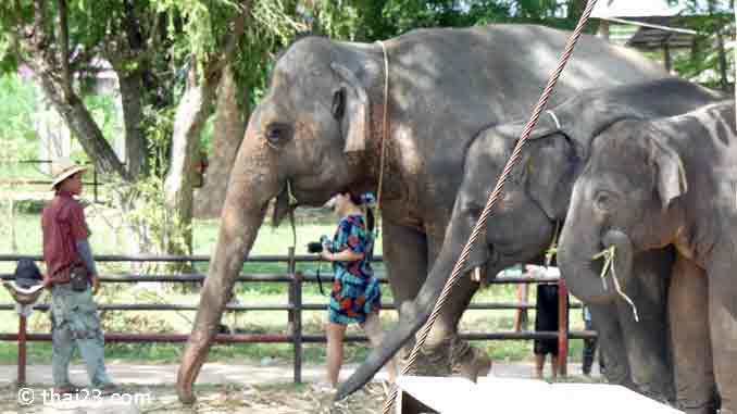 Elefanten beim Fressen