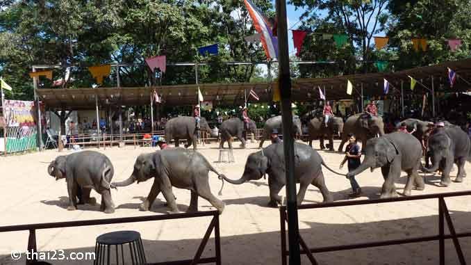 Show im Elefantendorf Ban Ta Klang