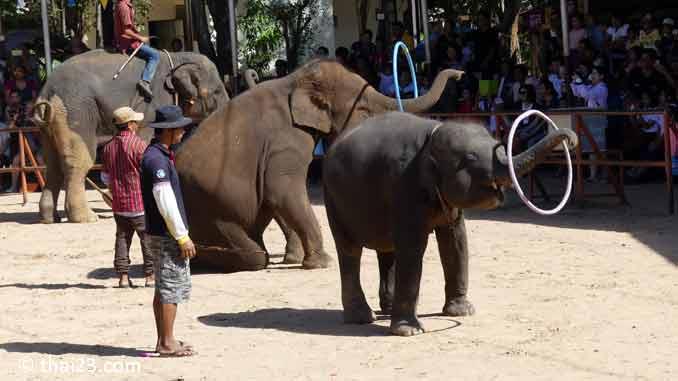 Elefanten Show im Ban Ta Klang Elefantendorf