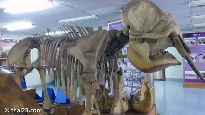 Ban Ta Klang Elefantenmuseum Surin
