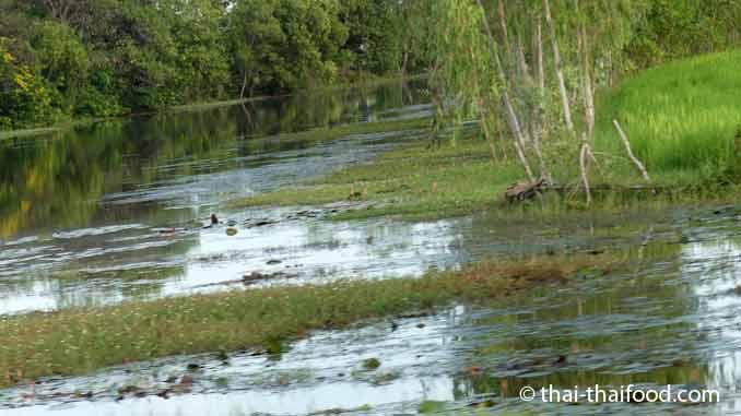 Chikungunya Fieber Thailand 2019