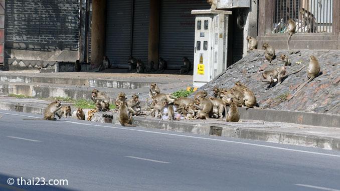 Affen auf den Strassen von Lopburi