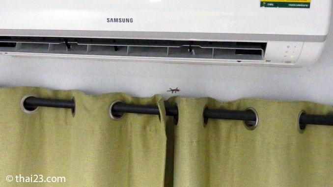 Gecko Grössenvergleich