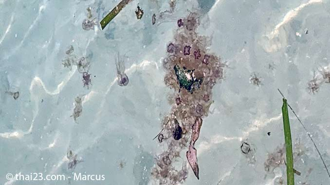 Quallenplage am Paradise Beach von Koh Kradan