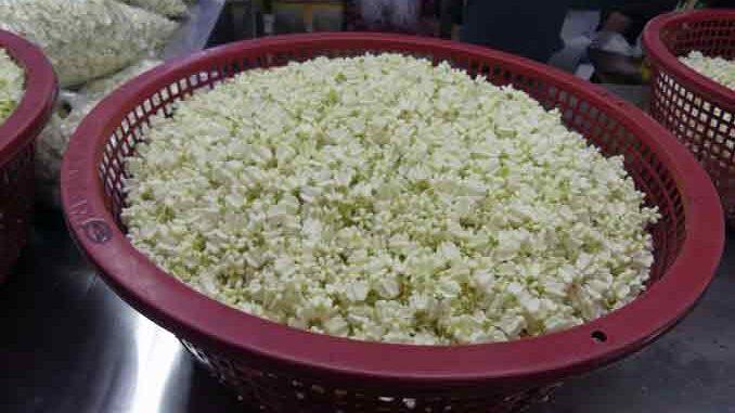 Kronenblume Madar Knospen kaufen